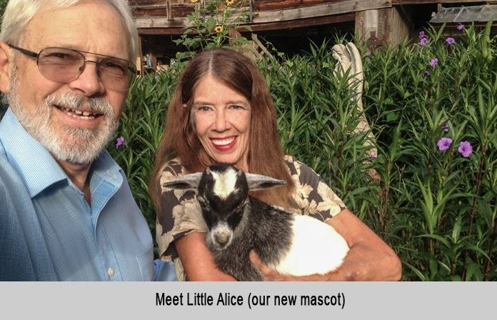 Meet little Alice, our new mascot.
