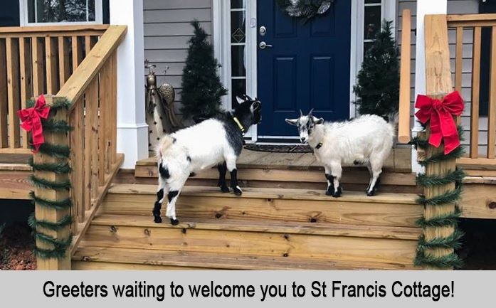 Alice and Snowflake, the greeters waiting to welcome uyou to St Francis Cottage.