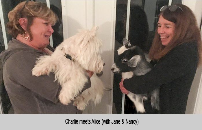 Charlie, the dog, meets Alice, the goat.  With Jane and Nancy.