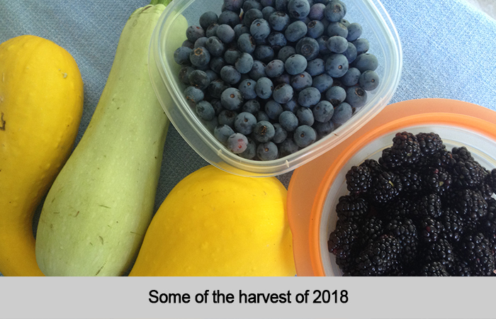 Some of 2018 Harvest at St Francis Cottage