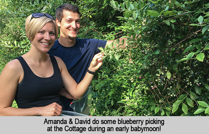 Amanda and David do some blueberry picking at the Cottage during an early babymoon.